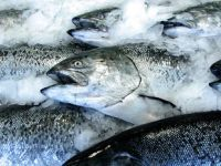 Choosing Sustainable Seafood