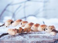 Grilled Bread Sticks recipe