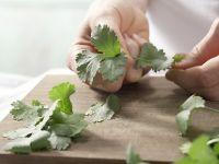 Cilantro leaves Recipes