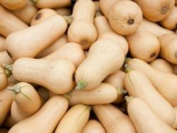 The Butternut Squash is Popular in Winter!