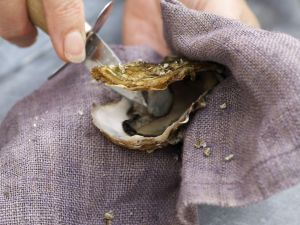 Oysters for Health