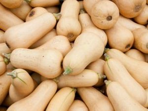 Butternut Squash: Everything You Need To Know