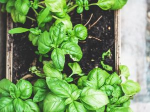 How to Grow Your Own Indoor Vegetable Garden