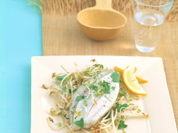 Fish with Sprouts and Cilantro