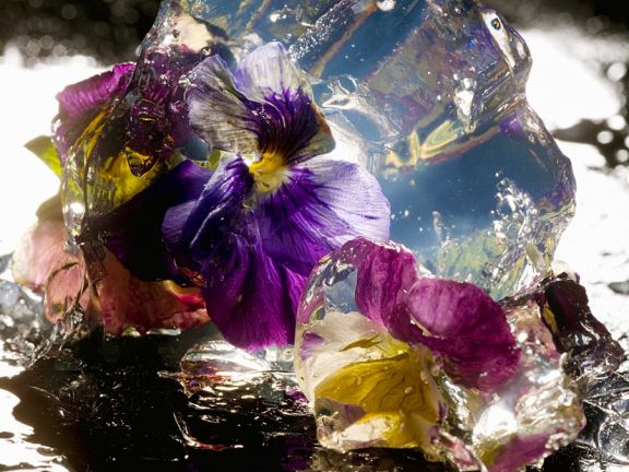 Pansy Blossoms Aspic