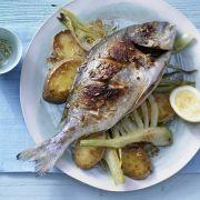 Summer Dish Recipes