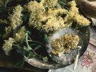 Fried Elderflowers in Orange Scented Batter recipe